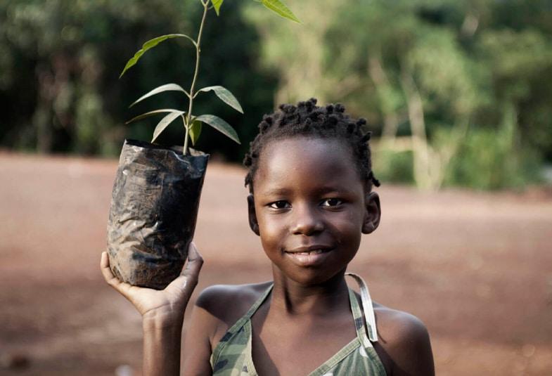 plantaciones del mango africano