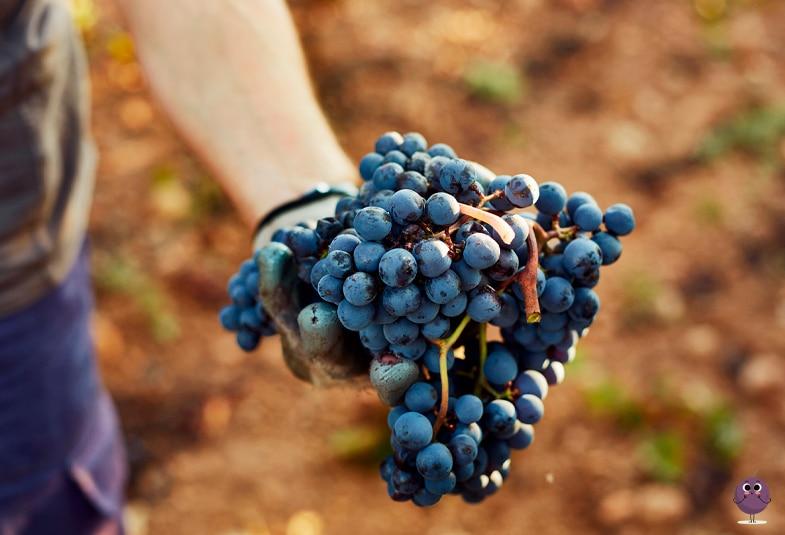 Calendario de la temporada de las frutas para unos alimentos ecológicos