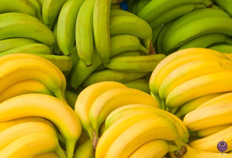 plátano de temporada