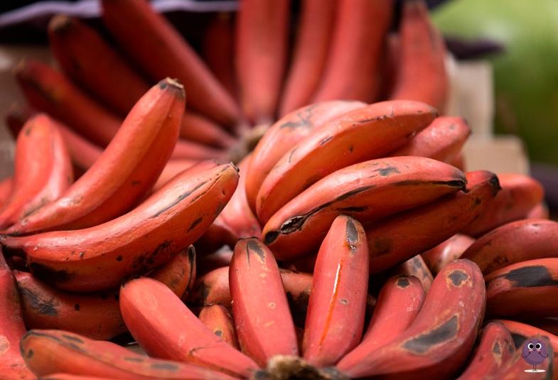 plátano rojo propiedades